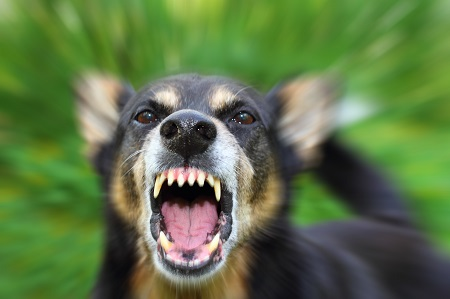 $85,000 settlement for dog bite injury to hand in Wisconsin