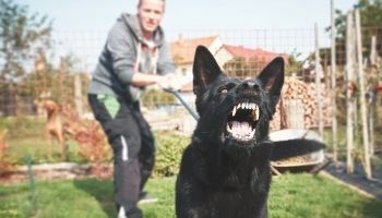 Wisconsin Dog Bite Injury Lawyer